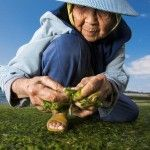 La dieta japonesa: Pros, contras y consejos